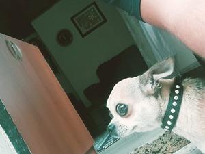 yaş 1 köpek Beylikbağı Mah.
