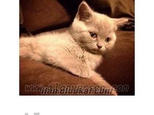 kedi ilanlari Fenerbahçe Mah.