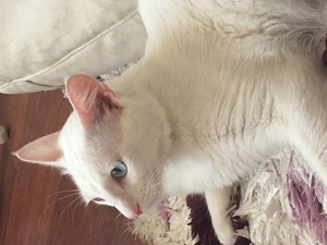 1 kedi Bulgurlu Mah.