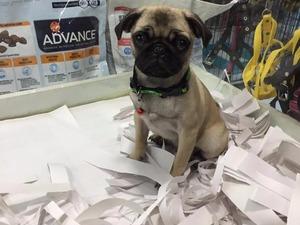 Kızılay Mah. köpek ilanı ver