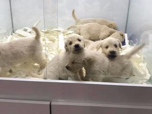 Ostim OSB köpek fiyatları
