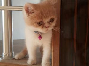 Demirci Mah. kedi ilanı ver