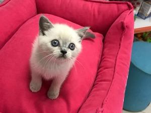 Balat Mah. kedi fiyatları