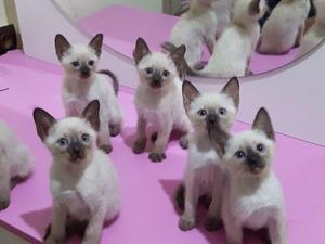 Manavkuyu Mah. kedi ilanı ver
