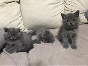 Modernevler Mah. kedi fiyatları