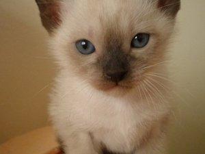 Akpınar Mah. kedi ilanı ver