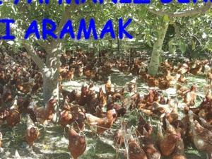 Mehmet Akif Mah. hayvanlar ilanları