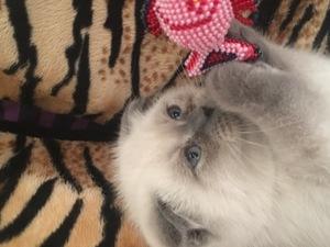Eymir Mah. kedi fiyatları