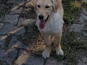 Dişi köpek Selimpaşa Merkez Mah.