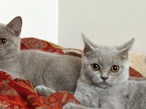 Mevlanakapı Mah. kedi ilanları