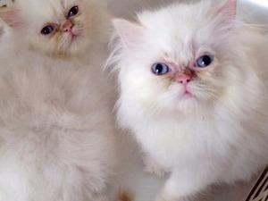 Bostancı Mah. kedi ilanı ver