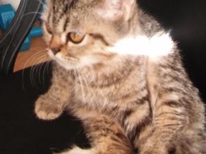 Cevizli Mah. kedi ilanı ver