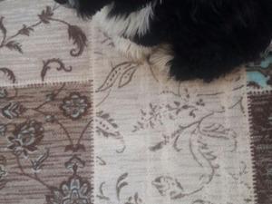 Maltepe Mah. köpek ilanı ver