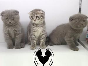 0-3 Aylık kedi Cumhuriyet Mah.