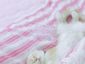 Donanma Mah. kedi ilanı