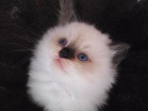 Mehmet Akif Mah. kedi ilanları