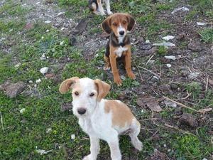 Çamlı Köyü köpek ilanı ver