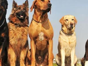 Köpek üretim pansiyon ve eğitim çiftliği projeme ORTAK arıyorum