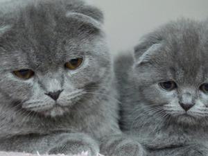 Mevlanakapı Mah. kedi ilanı ver