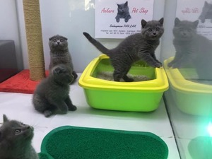 Ayrancı Mah. kedi ilanları