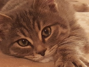 Ankara Ücretsiz kedi yuva arıyor...