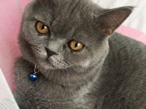 kedi ilanlari Erenköy Mah.