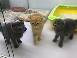 Ayrancı Mah. kedi ilanı