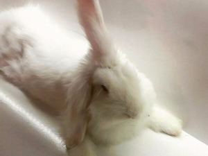 Siyavuşpaşa Mah. tavşan ilanı