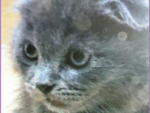 kedi ilanlari Kırkkonaklar Mah