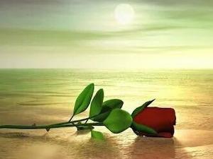 aşk ve sevgi arayan bayan arkadaş arıyorum