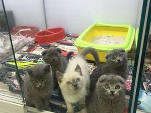 Ayrancı Mah. kedi fiyatları