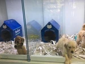 Ayrancı Mah. köpek fiyatları