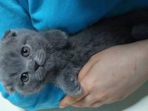 Dişi kedi Cevizli Mah.