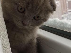 0-3 Aylık kedi Karlıktepe Mah.