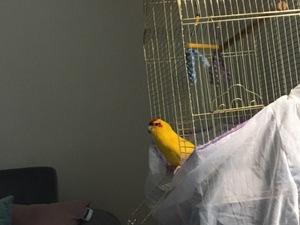 Papağan fiyatları Kağıthane