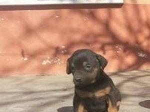 Bademler Köyü köpek ilanı ver