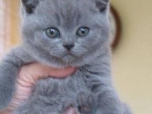 Atakent Mah. kedi ilanları