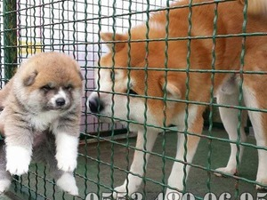 Fevzi Çakmak Mah. köpek ilanları