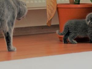 0-3 Aylık kedi Eymir Mah.