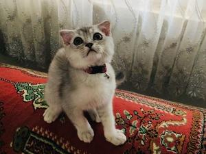 Ahatlı Mah. kedi ilanları