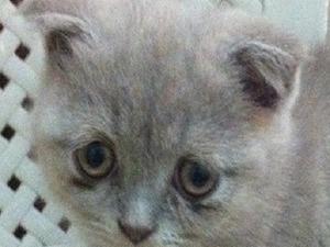 Dişi kedi İhsaniye Mah.