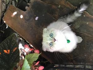 3-6 Aylık kedi Ahatlı Mah.