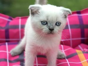 Balat Mah. kedi ilanı ver