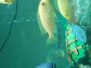 Balık takası toplu satış yapılır