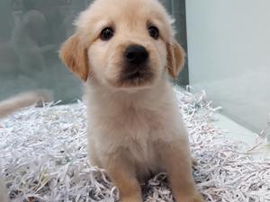Balat Mah. köpek ilanı ver