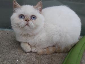 Balat Mah. kedi ilanları