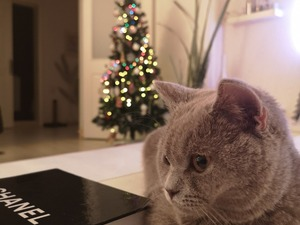 Fener Mah. kedi ilanı ver