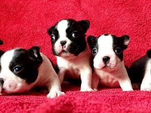 Fevzi Çakmak Mah. köpek ilanı