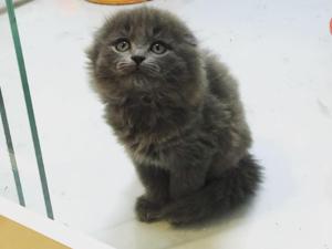 0-3 Aylık kedi Macun Mah.