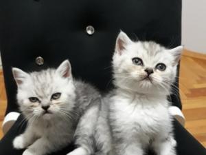 Yalı Mah. kedi ilanı